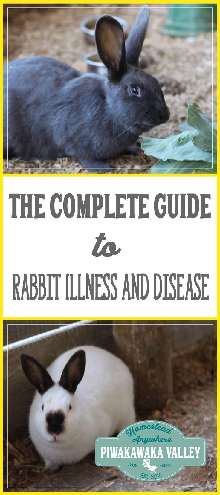 best 25 homemade rabbit treats ideas on pinterest rabbit treats