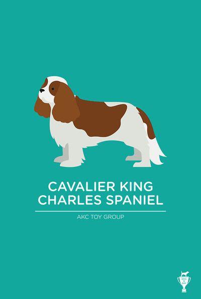 Cavalier King Charles Spaniel @Deborah Wright @Hannah Wright