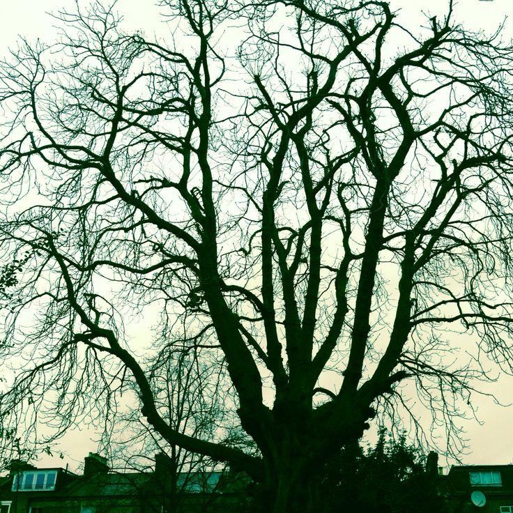 #treeoflaxmi moody #sunday 8.45 am. 23 Feb, 2014