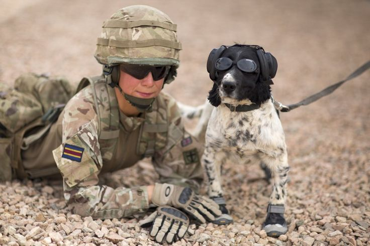 Brit' army dog and handler.
