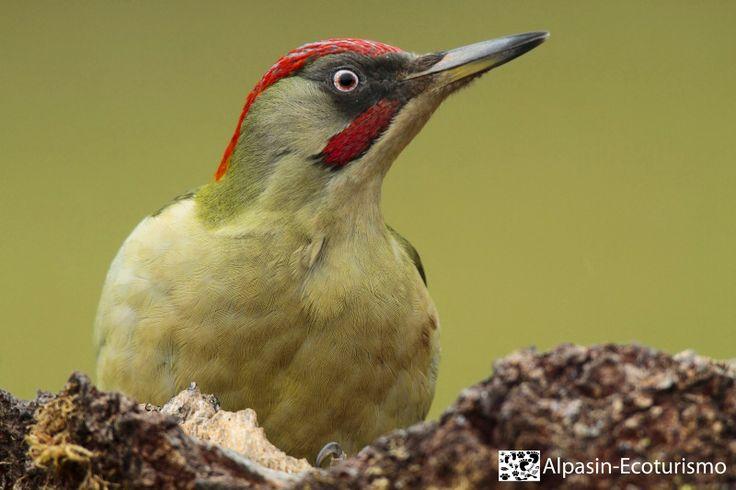 muy pronto nuestro hide para algunas de las aves forestales presentes en el monte mediterráneo andaluz...
