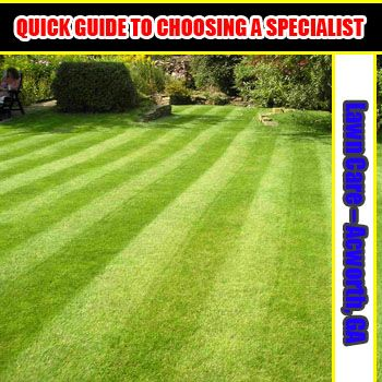 Following a turf standard maintenance, and having a customized treatment to fix lawn issues  are two of the things that one should look into when hirinf lawn care specialists. This is to ensure that you lawn is in the right hands.