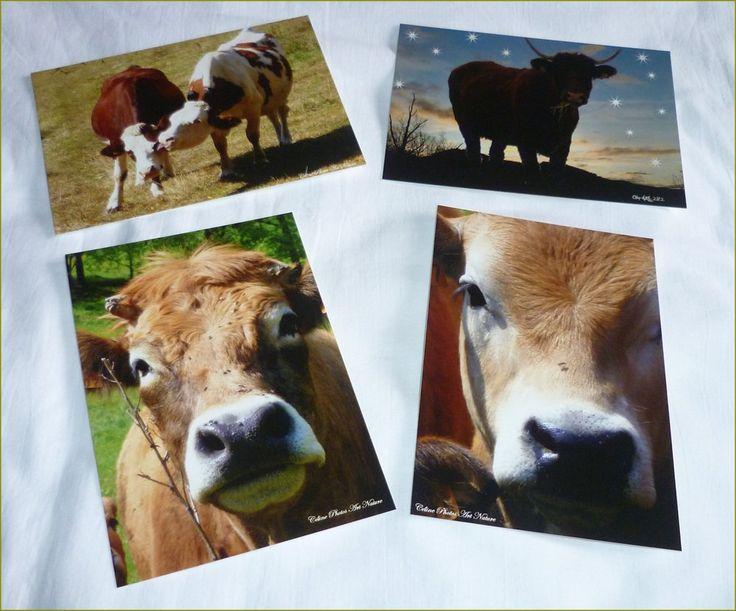 """Lot de 4 cartes postales 10,5x15cm avec des photos de vaches""""Amour de vaches"""" : Cartes par celinephotosartnature"""