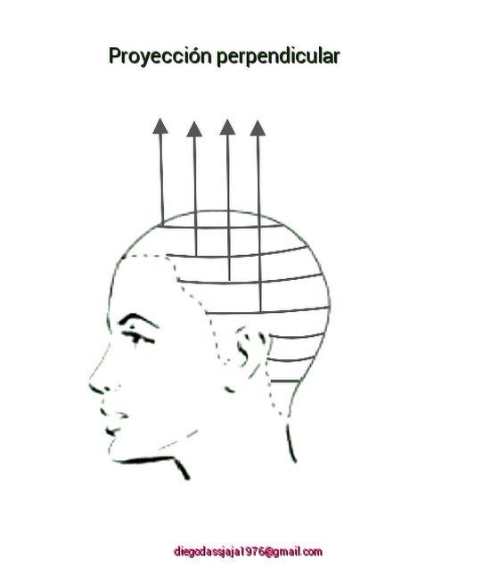 60 best diagramas de corte de cabello andr u00e9s sansan images