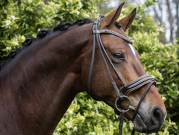 Come on over and join me in the FREE Competition Success online workshop and be in the draw to win a Belle Equestrian Noble Snaffle Bridle