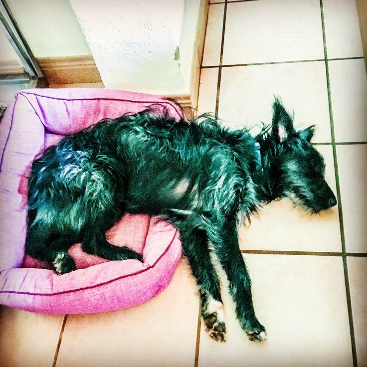 Hund zu gross, Bett zu klein