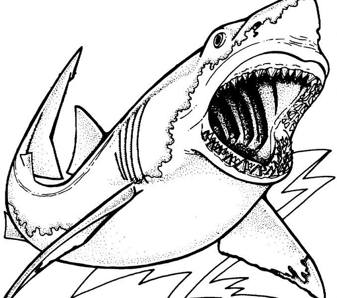 Free Printable Pictures Of Sharks Coloring Europe Travel Guides Now At Https Ift Tt 2hthwf Shark Coloring Pages Animal Coloring Pages Coloring Pages For Boys