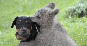 25 szenzációs állatos kép, amit látnod kell, mielőtt meghalsz