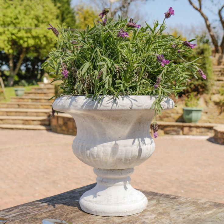 featuring a traditional antique design this garden planter makes a great addition to a patio or rock garden in a neutral cream colour with a distressed