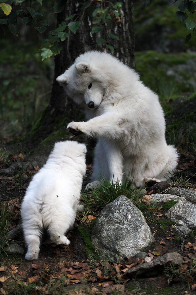 Two playful pups playing away!