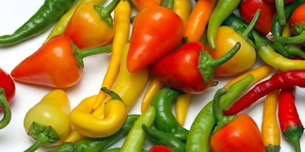 Chili dyrkning. Sådan lykkes dyrkning af chili på friland