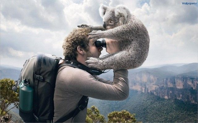 Funny Animals Wallpaper HD