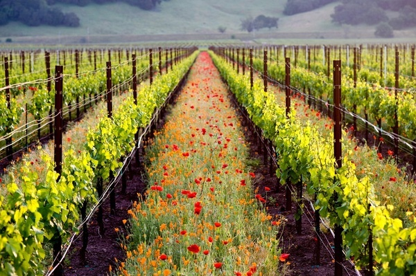 It's the place in which dreams are made.  Sonoma Valley California.