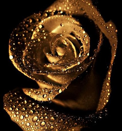 1000+ ideas about Golden Roses on Pinterest  How To Style ...