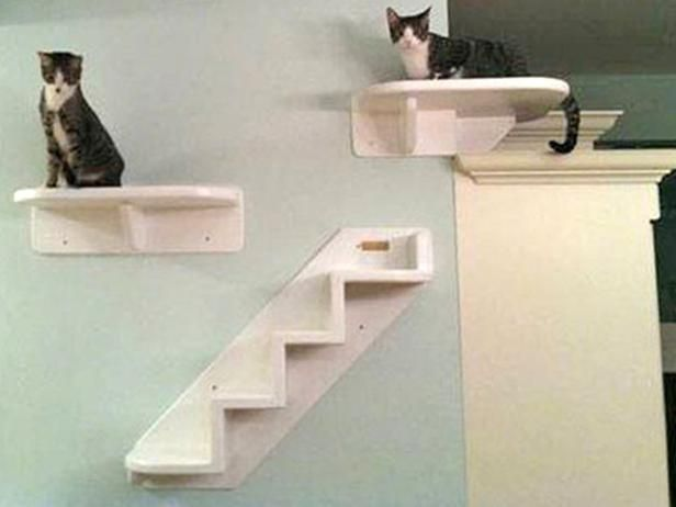 The Best Cat Condos, Beds and Shelves : Home Improvement : DIY Network - Crazy Cat Lady Status but I still want this.