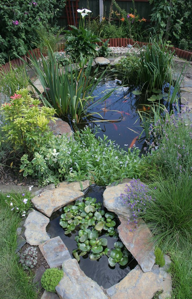cute little pond