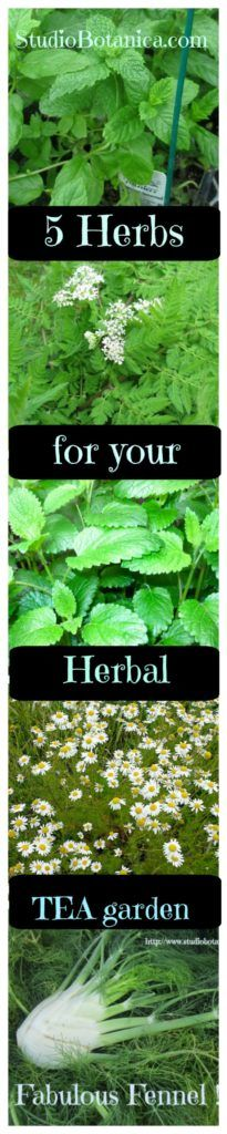Your own herbal tea garden awaits! check out these 5 ideas and why you want them in your garden!: