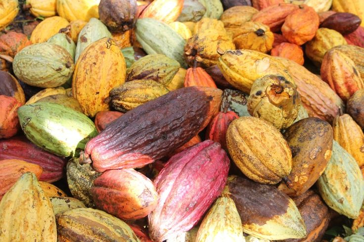 10 facts about Fairtrade chocolate to remember this Chocolate Week