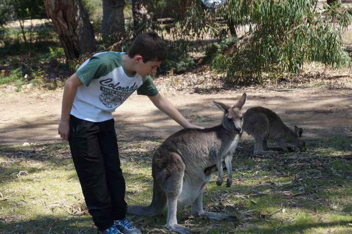 Looking for some activities to keep the kids entertained over the #School #Holidays ? It's a great bonding activity with kids to feed the #kangaroos and see different kinds of #wildlife  here in +Waterfront Retreat At Wattle Point  #InspiredbyGippsland #SchoolHolidays #TourismVictoria