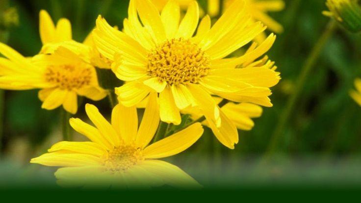 Body-Aromatherapie|LIFETOWER