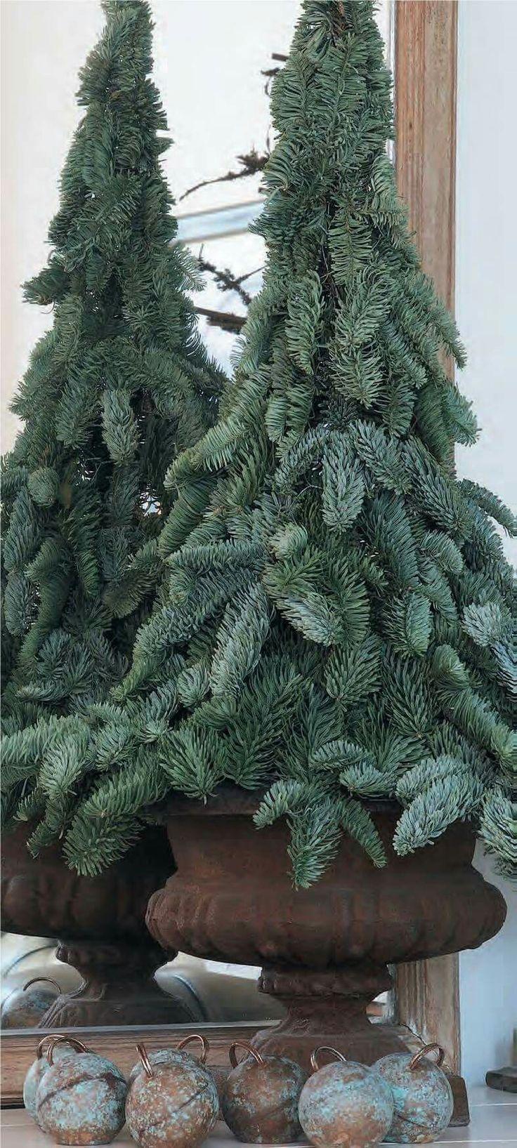 Christmas tree by Antonella Rossi