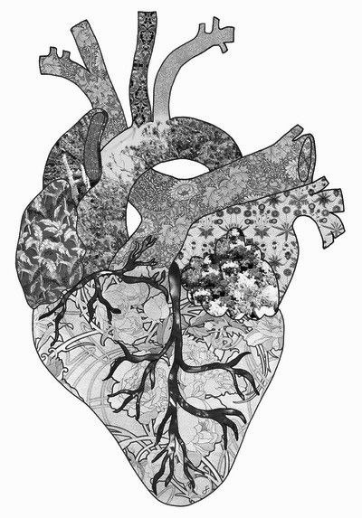 how to draw lungs and heart