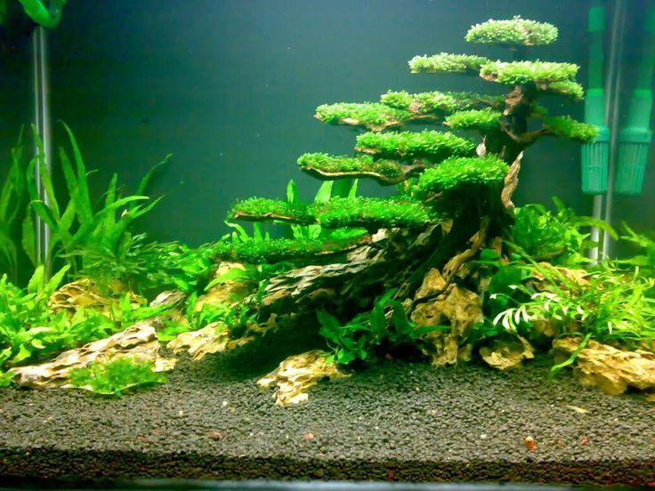 planted tank moss tree