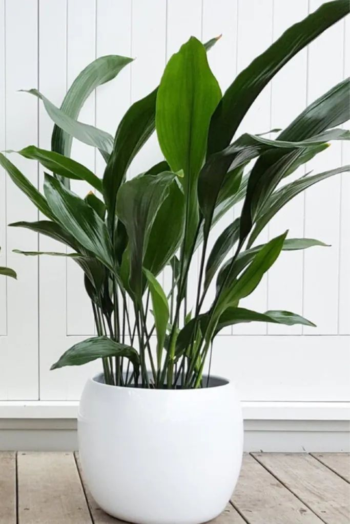 Bathroom plants that absorb moisture - Missmv.com in 2020 ...