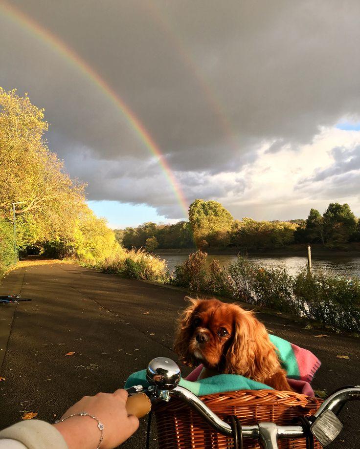 Double rainbow , cavalier King Charles spaniel , dog in basket