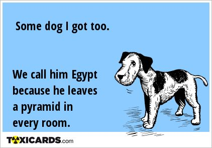 Some dog I got too. We call him Egypt because he leaves a pyramid in every room.