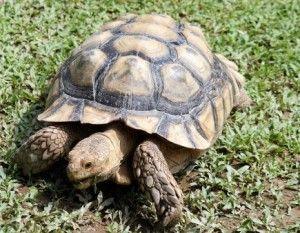 Schildkröten Haltung – dauerhaft auf Wanderschaft