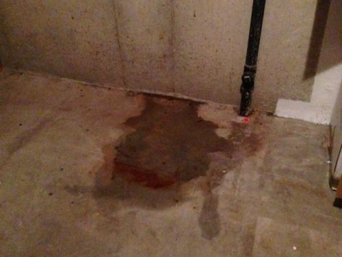 Mold In Shower Make You Sick 45 best mold can make you sick images on pinterest | toxic mold