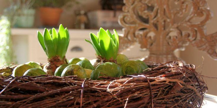 LAV EN KRANS - Brussels sprout-wreath