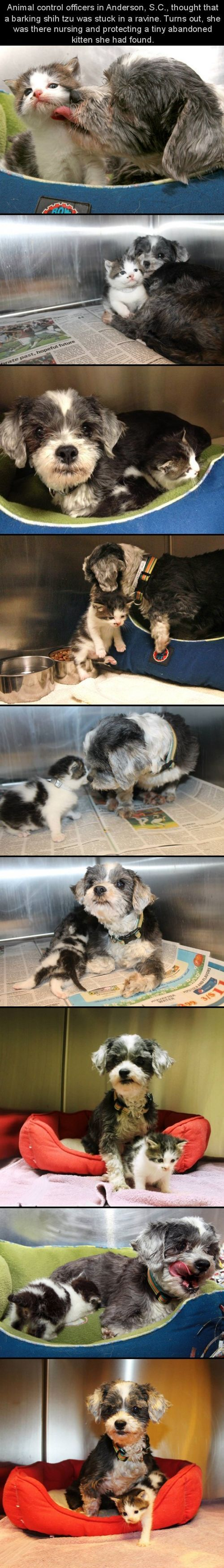 Dog Finds A Tiny Kitten, Risks Everything To Save Her....animals are AMAZING!