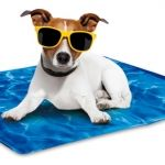 AFP Chill Out Always Cool Dog mat  AFP Cool Dog Mat  AFP Cool Dog Mat Speciale koelmat voor honden. De speciale gel binnenin de mat zorgt ervoor dat deze mat altijd koel is zelfs op de warmste dagen. Extreem aangenaam voor honden. Hoeft niet gekoeld te worden in de koelkast. Bevat geen chemische bestanddelen. Makkelijk schoon te maken en op te vouwen. Wordt geactiveerd door het lichaamsgewicht van de hond. De mat zal 10 tot 15 graden koeler zijn dan de omgeving voor een periode van 3 tot 4…