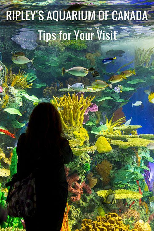 canada, aquarium of canada, places to visit in toronto, toronto attractions