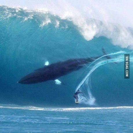 Sickest surf pic ever