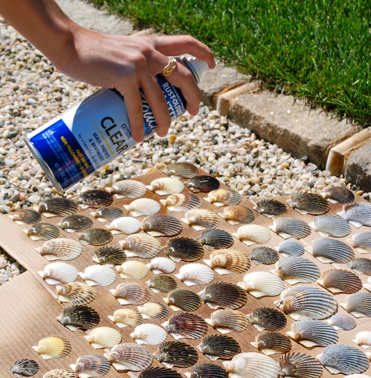 make shells come to life by spraying them with Rustoleum Clear