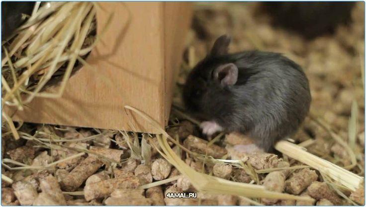Хомяки  #черепахи #кролики #попугаи #хомяки #животные #Россия #Серпухов #Москва #СПБ #Тула #Саратов #Курск #Хабаровск #russia #animals #animal #love #loveanimal #moskow #spb #do