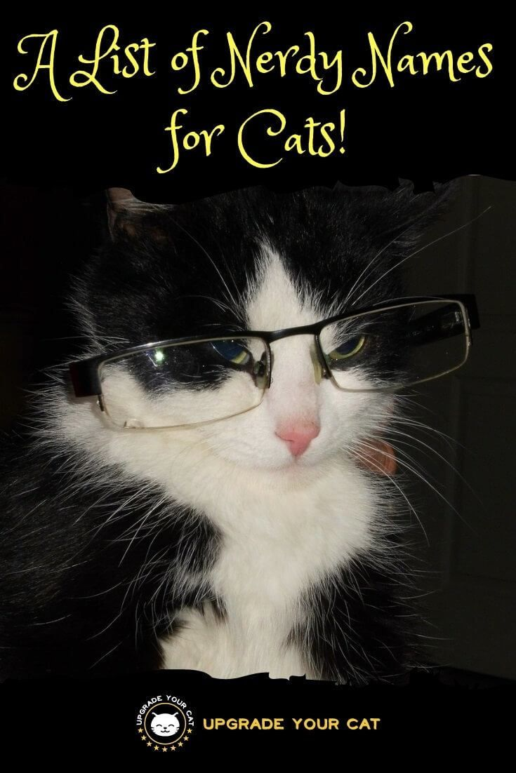 Huge List Of Nerdy Cat Names For Your Kitty Upgrade Your Cat Cat Names Kitten Names Girl Cat Names