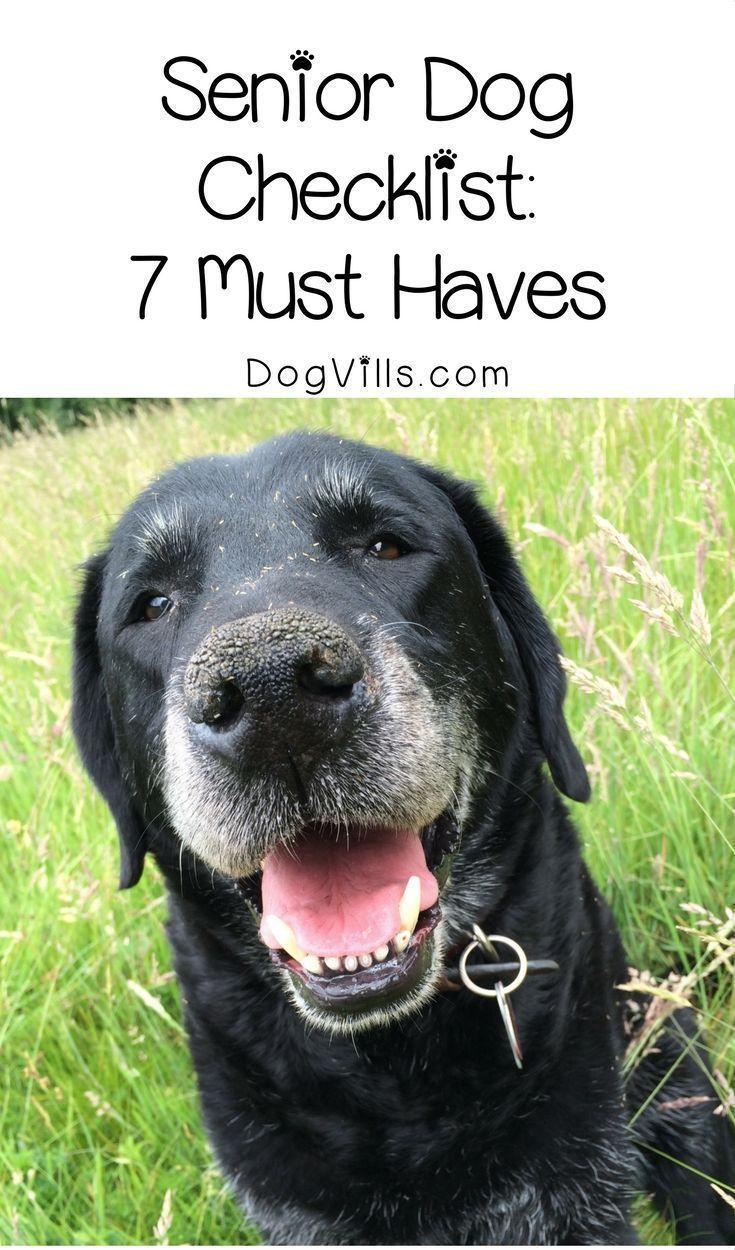 Senior Dog Checklist 7 Items To Keep On Hand Dog Care Dogs