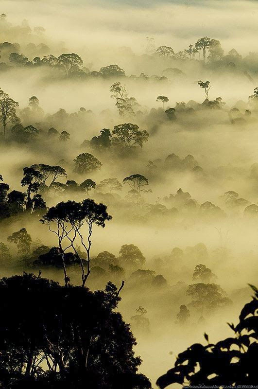 Mist of Life, Borneo, Indonesia.