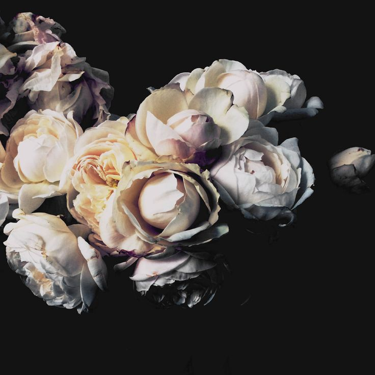 Amazing bouquet of peonies. The perfect artwork to remember a beautiful bouquet. Floragraphica | Modern bouquet preservation with photography