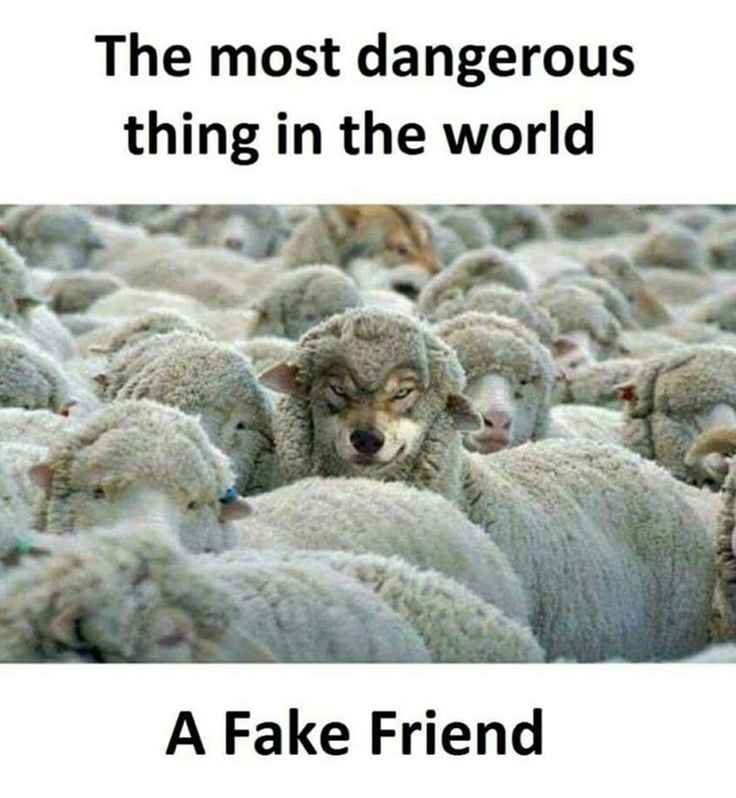 Wolves in sheep's clothing, pretending to be everything they are not.  Claim to possess good qualities, but, are hypocrites, liars, slanderers and pot stirrers.  Unbelievable how horrid they really are.