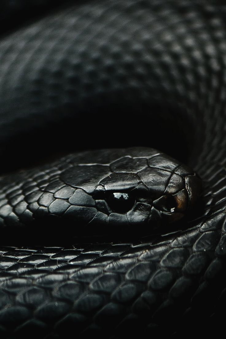 best 25 black snake moan ideas on pinterest pics of snakes