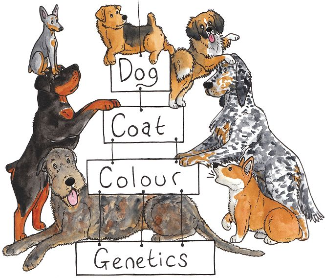 Dog Coat Colour Genetics- not a book, but something I'd love to read/study