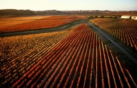 Autumn in the Gimblett Gravels winegrowing area