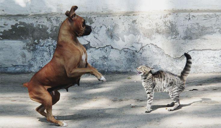 犬のことわざ故事成語人間関係家家族いつも一緒にいる犬だから