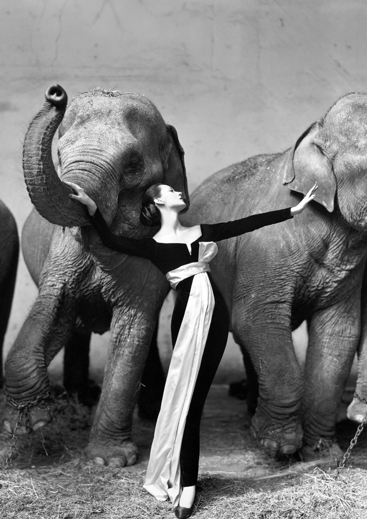 Dovima between elephants in Dior, 1955 Cirque D´Hiver.  one of my favorite photographs of all time.