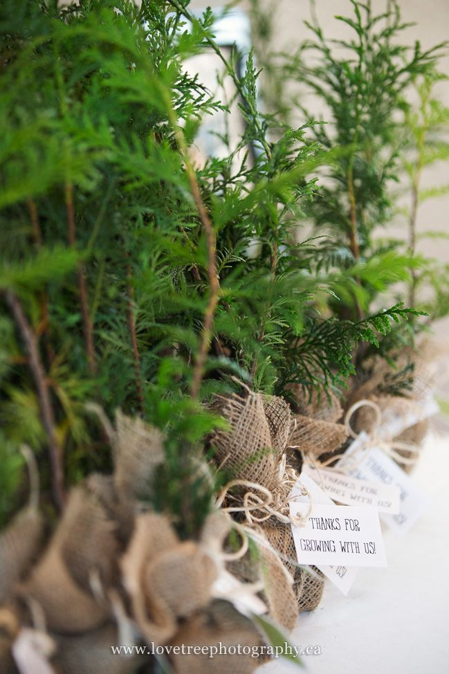 """tree wedding favors for a rustic or forest wedding. They say """"Thanks for growing with us."""" 